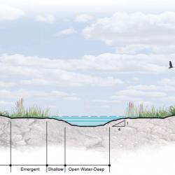 Wetland Hydrosere